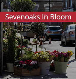 Sevenoaks in bloom